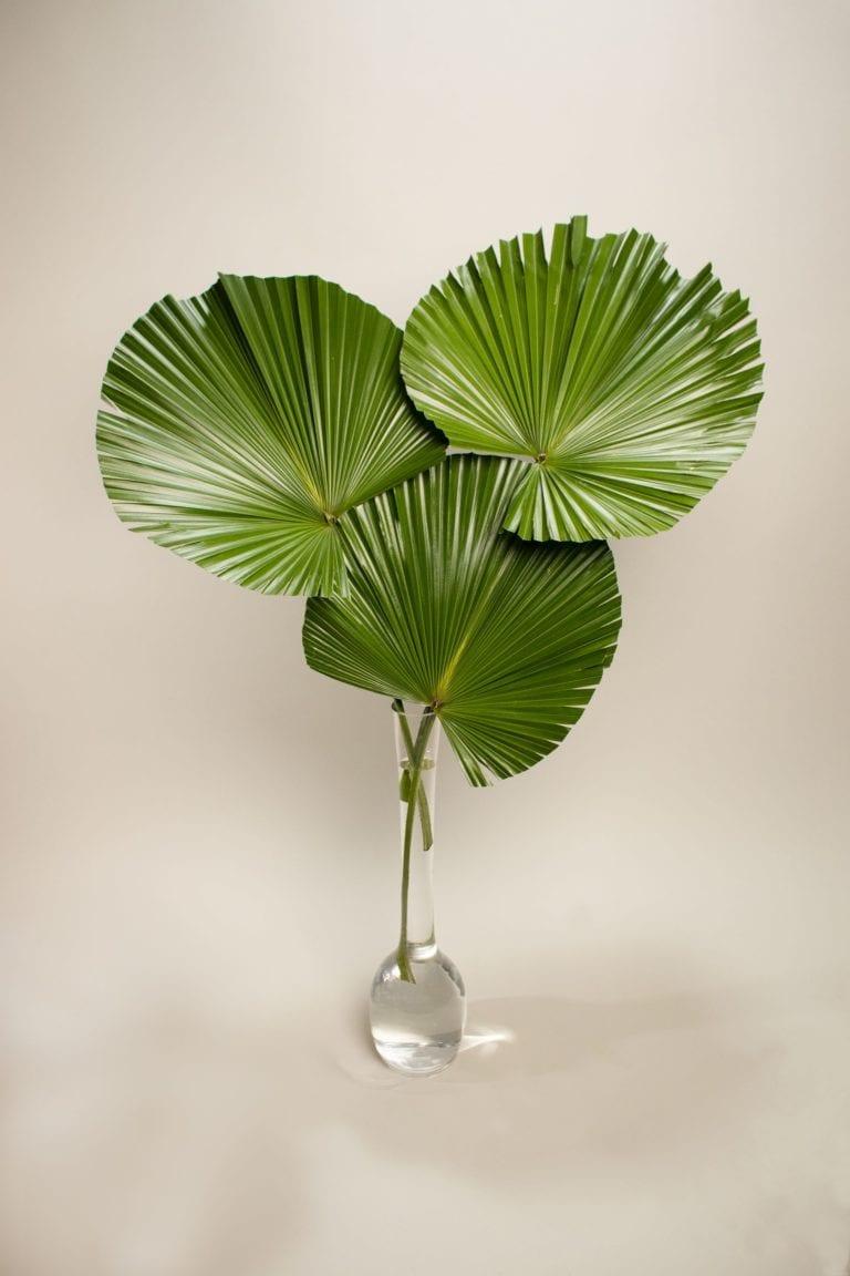 palmfoliage